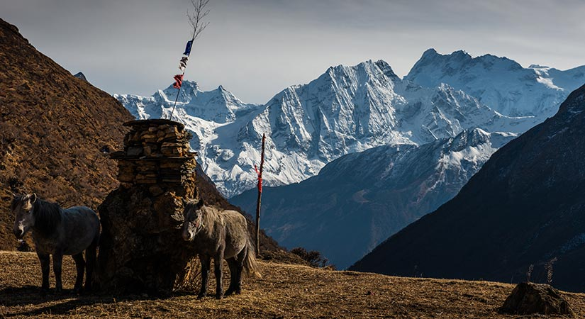 Horses are standing two side of Chortne and backround of mountains view in Manaslu Tsum Valley trek