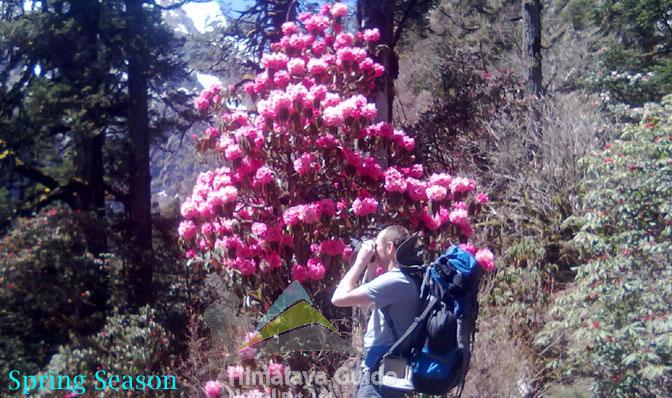 Traveler enjoying with Rohodrendron flower spring season in MManaslu Trek